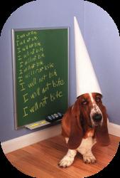doggie dunce