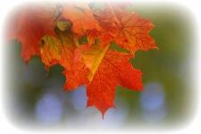 autumn-2726242_1920